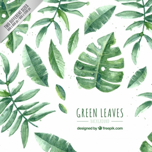 Met de hand geschilderd groene bladeren pakken Gratis Vector