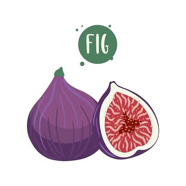 Met de hand getekende illustraties van vijgenfruit. Premium Vector