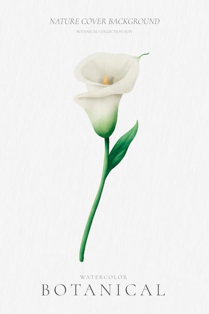 Minimale bloemenachtergrond met mooie lelie Gratis Vector
