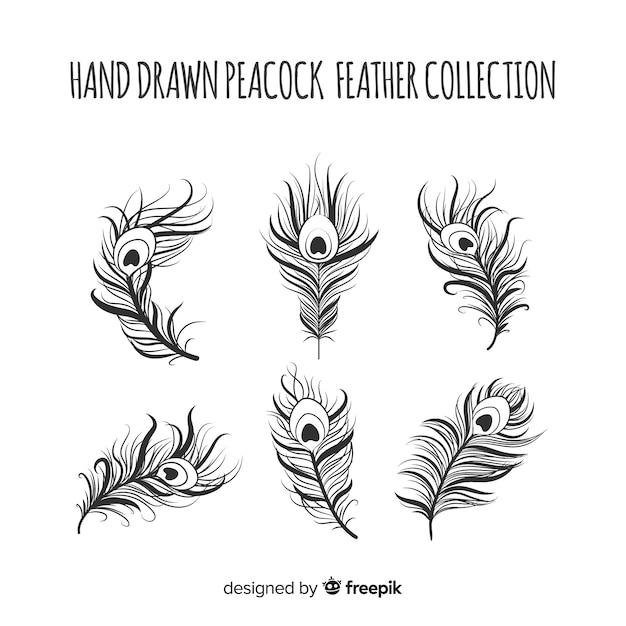 Moderne hand getrokken pauw verencollectie Gratis Vector