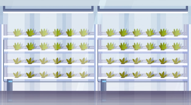 Moderne organische hydrocultuur verticale boerderij interieur landbouw slim landbouwsysteem concept groene planten groeiende industrie horizontaal Premium Vector