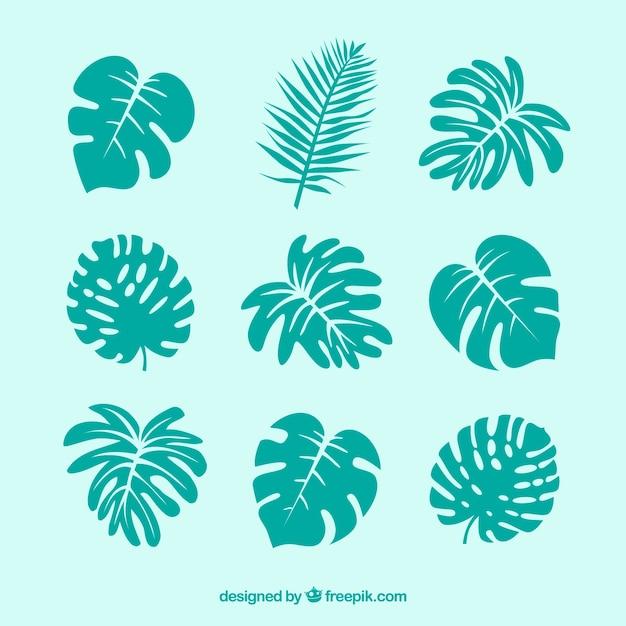 Moderne set van tropische bladeren met platte ontwerp Gratis Vector