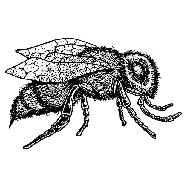 Monochroom dier pictogram met afbeelding van bijen hand getekend op witte afbeelding Gratis Vector