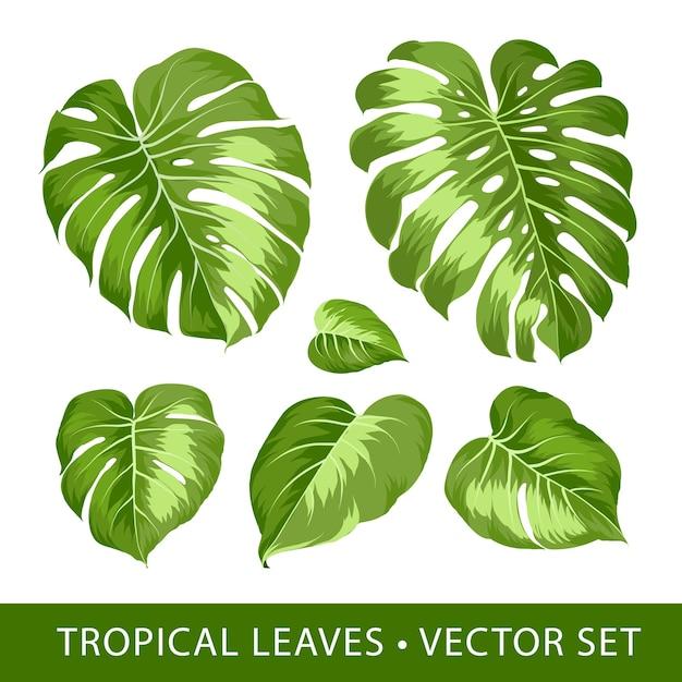 Monstera blad tropische elementen instellen. Gratis Vector