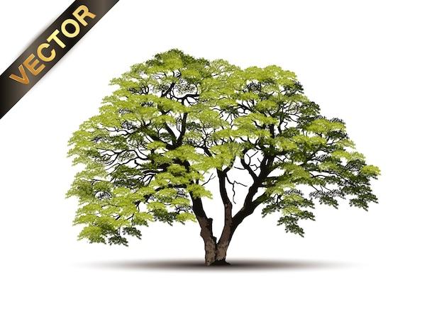 Mooie boom realistisch op een witte achtergrond Premium Vector