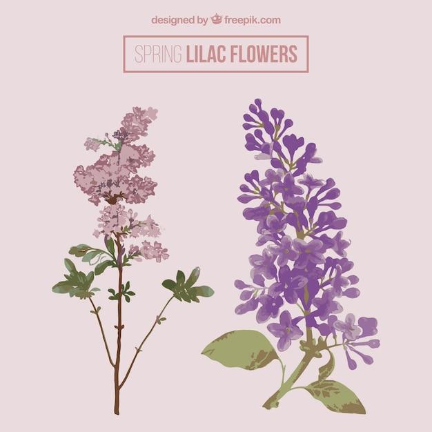 Mooie lila bloemen Premium Vector