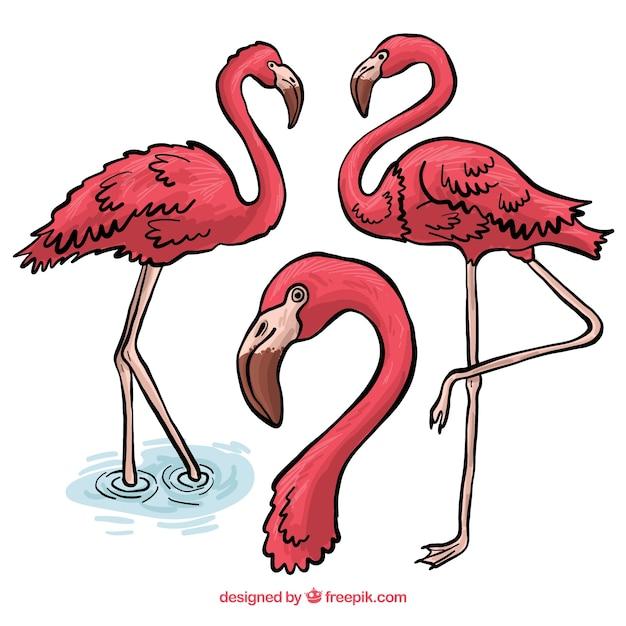 Mooie set van hand getrokken flamingo's Gratis Vector