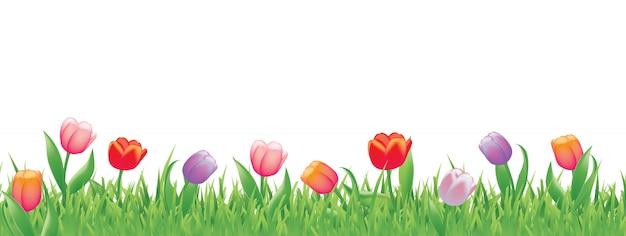 Mooie tulpen voor de lente Premium Vector