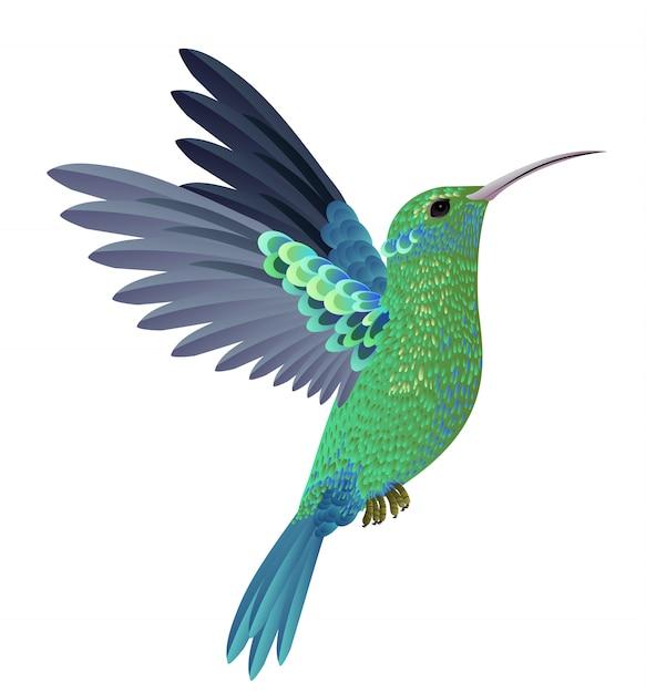 Mooie vliegende kolibrie. ontwerpelement. voor banners, posters, folders en brochures Gratis Vector