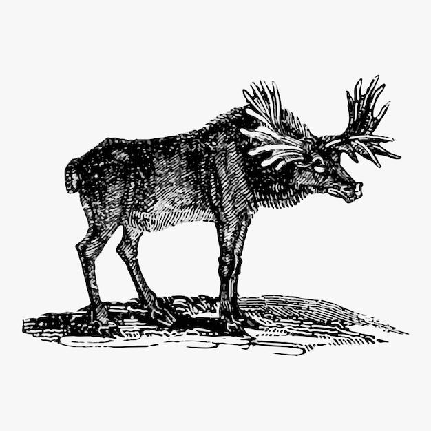 Moose vintage stijl Gratis Vector