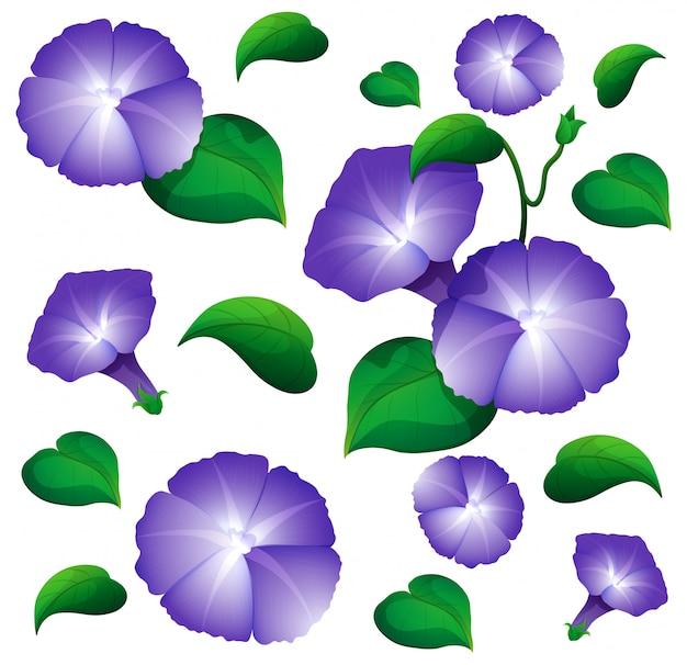 Naadloze achtergrond met morning glory bloemen Gratis Vector