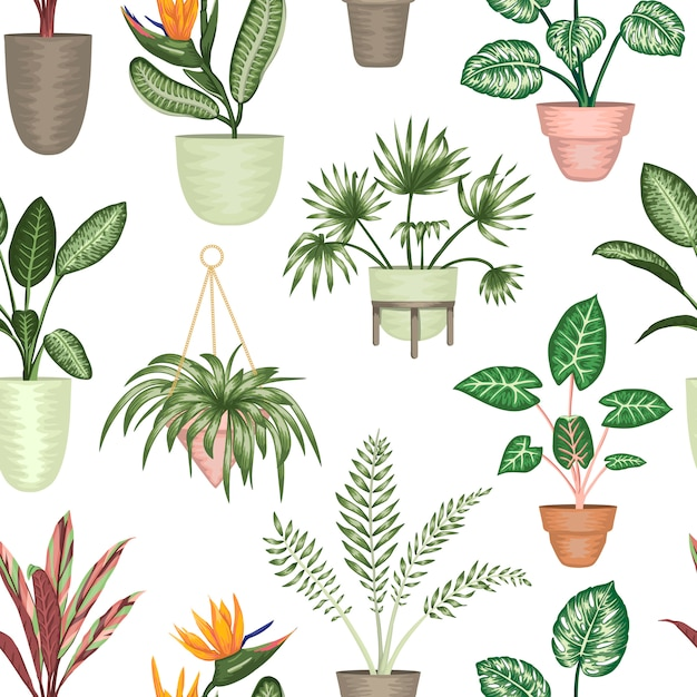 Naadloze patroon van tropische kamerplanten in potten geïsoleerd. heldere realistische strelitzia, monstera, alocasia, dieffenbachia, cordyline. Premium Vector