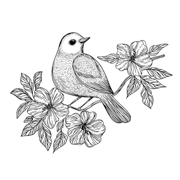 Nachtegaal songbird zit op een tak met bloeiende bloemen monochrome hand getrokken schets Premium Vector