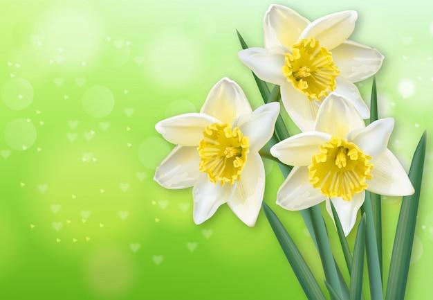 Narcissus lentebloemen Premium Vector