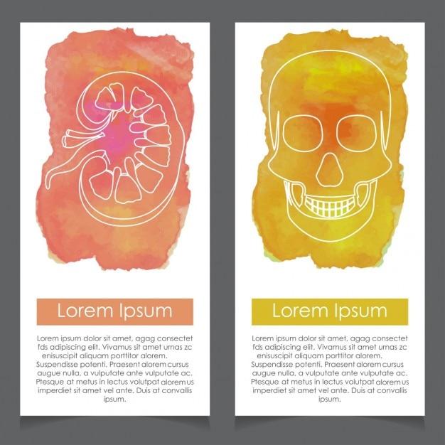 Nieren en skull aquarel sjabloon Gratis Vector