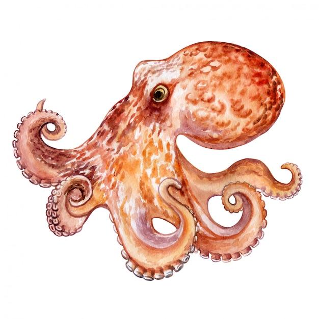 Octopus geïsoleerd. waterverf. illustratie Premium Vector