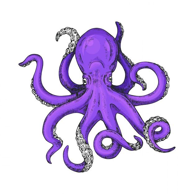 Octopus hand getekende illustratie Premium Vector