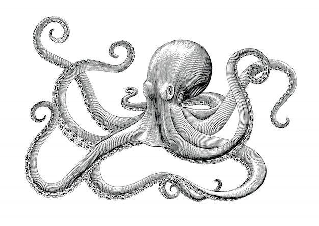 Octopus hand vintage gravure illustratie puttend uit witte achtergrondgeluid Premium Vector