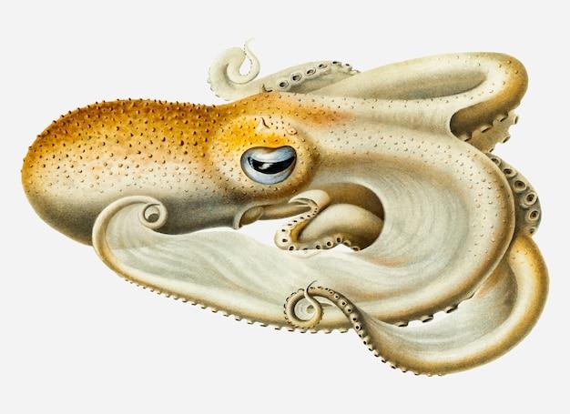 Octopus van velodona Gratis Vector