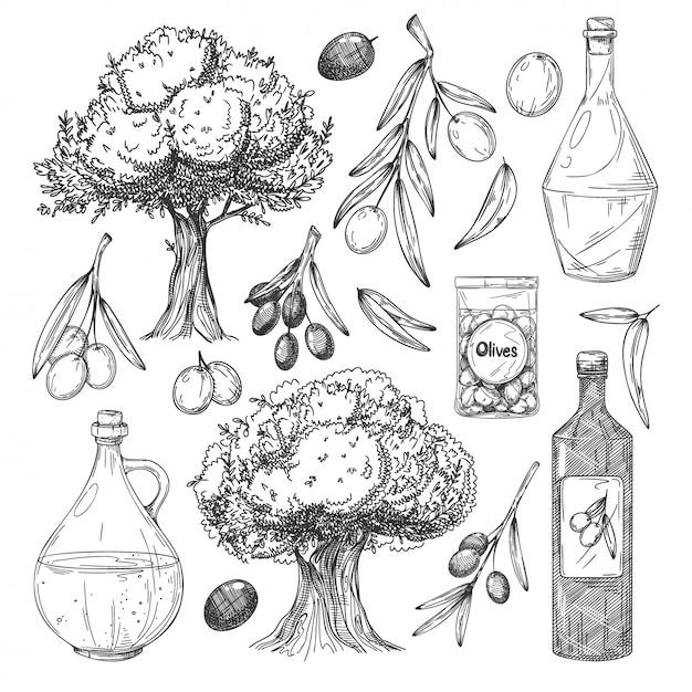 Olijfolieproductie schetsen ingesteld. olijfboom, tak, bladeren, flessen met olie, olijven in pot icoon collectie. biologische voedselproductie vintage illustratie Premium Vector