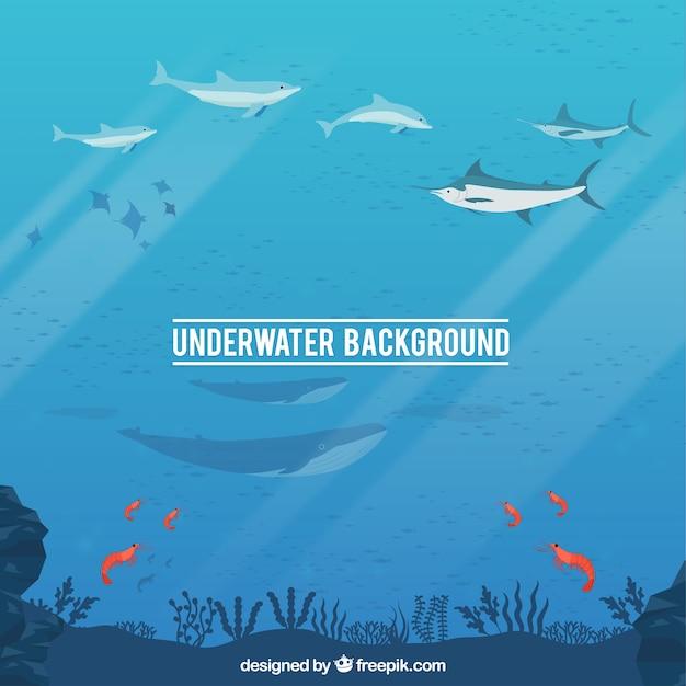 Onderwaterachtergrond met karikaturen van waterdieren Gratis Vector