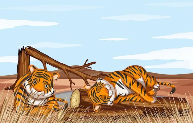 Ontbossingscène met zwakke tijgers Gratis Vector