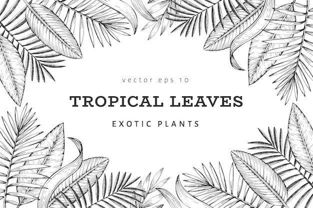 Ontwerp van de banner van tropische planten. hand getekend tropische zomer exotische bladeren illustratie. jungle bladeren, palmbladeren gegraveerde stijl. vintage achtergrondontwerp Premium Vector