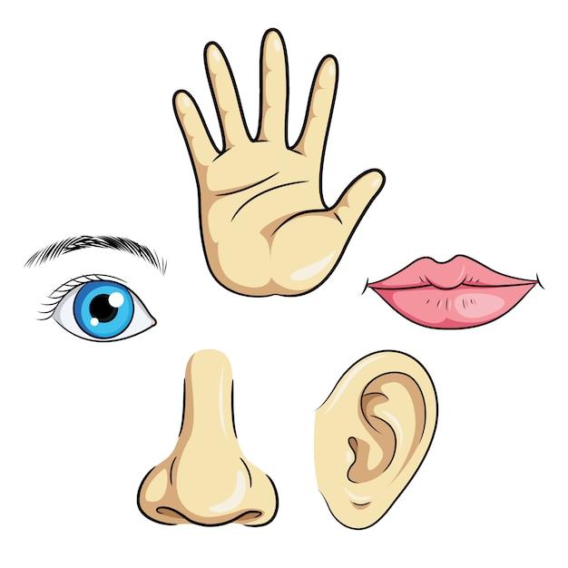 Oog neus oor lippen hand Premium Vector