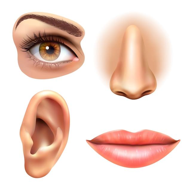 Oog oor lippen neus pictogrammen instellen Gratis Vector