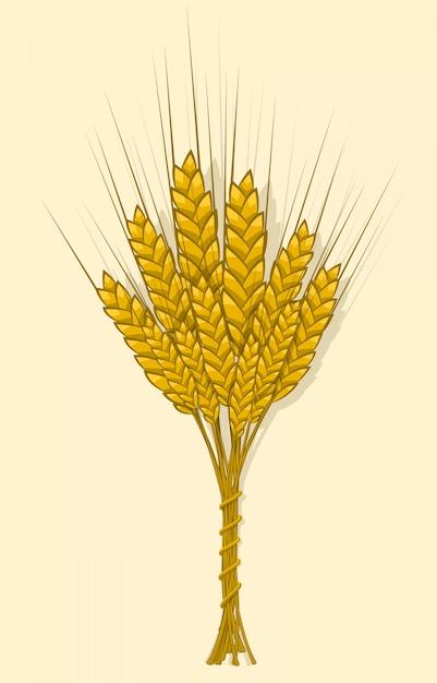 Oren van tarwe, gerst of rogge zijn tot één bundel geweven Premium Vector