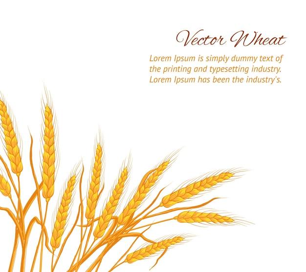 Oren van tarwe op witte achtergrond met voorbeeldtekstsjabloon Gratis Vector