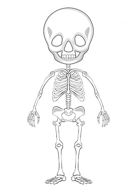 Overzichtstekening van een menselijk skelet Gratis Vector