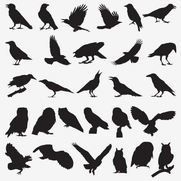 Owl crow silhouetten Premium Vector