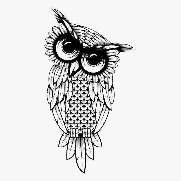 Owl vector ontwerp illustratie Premium Vector