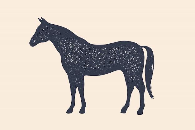 Paard, hengst. concept van landbouwhuisdieren Premium Vector