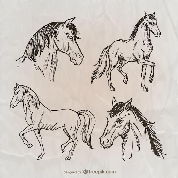 Paarden pakken Gratis Vector