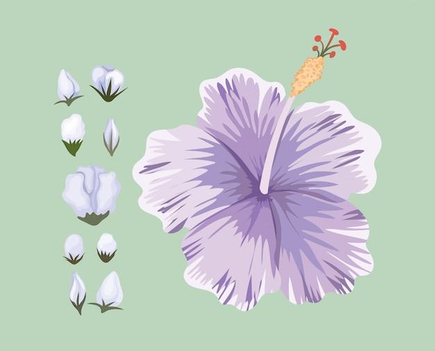 Paars hawaiiaans bloem schilderij ontwerp, natuurlijke bloemen natuur plant ornament tuindecoratie en plantkunde thema illustratie Premium Vector