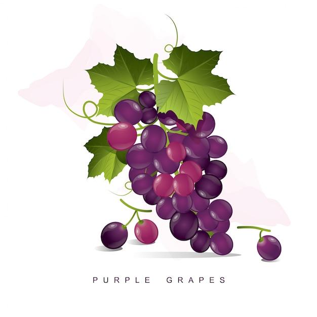 Paarse Druiven Premium Vector