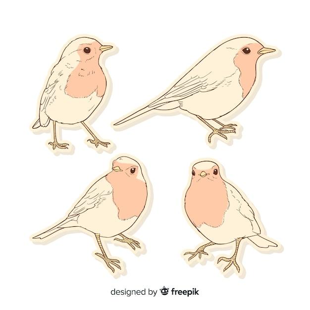 Pack van hand getrokken vogels Gratis Vector