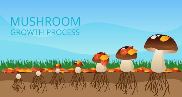 Paddestoel groeiproces infographics Gratis Vector