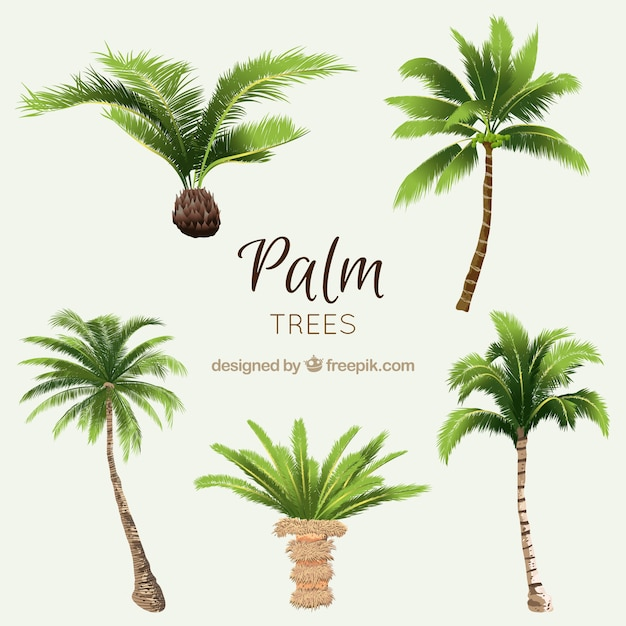 Pak van aquarel palmen Gratis Vector