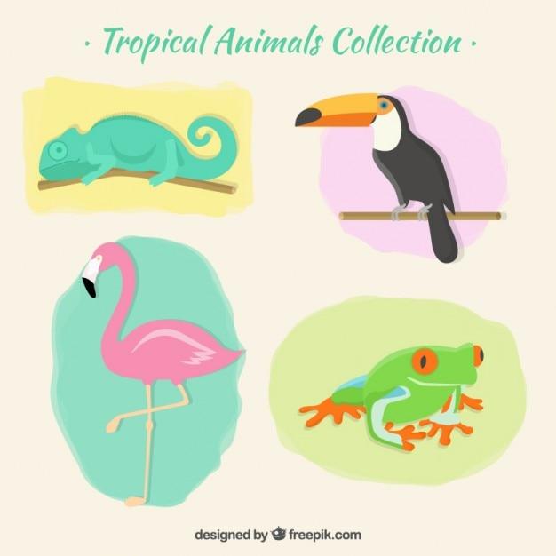 Pak van tropische dieren Gratis Vector