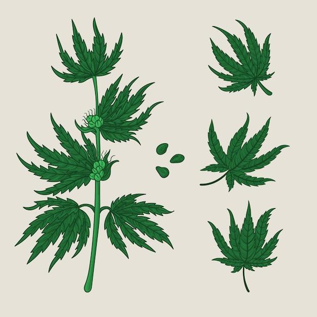 Pakje botanische cannabisbladeren Gratis Vector