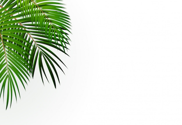 Palm leaf achtergrond Premium Vector