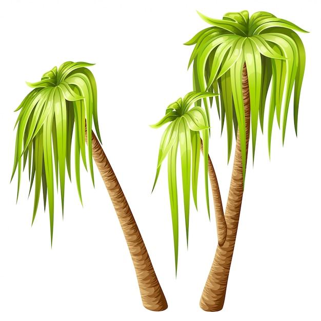 Palmbomen geïsoleerd op een witte achtergrond. Premium Vector