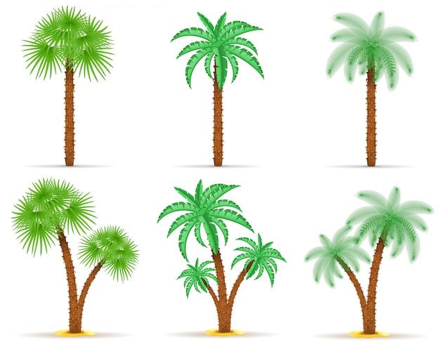 Palmboom vectorillustratie Premium Vector