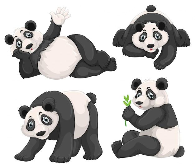 Panda in vier verschillende poses Gratis Vector