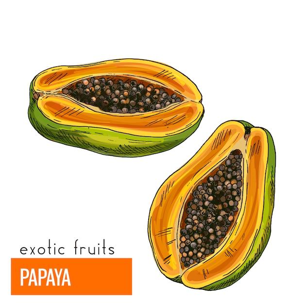 Papaja. kleur vectorillustratie. Premium Vector