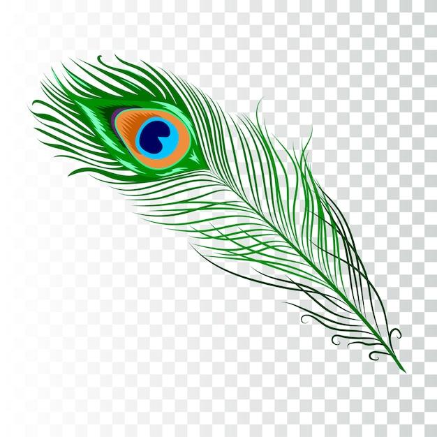 Peacock feather-collectie Premium Vector