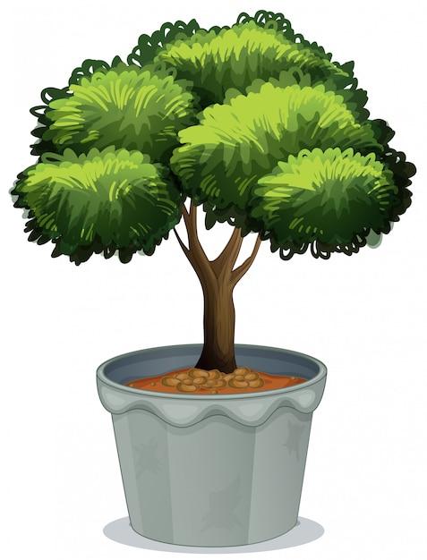 Plant in bloempot Gratis Vector